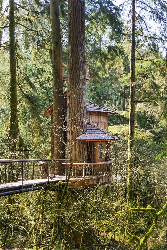 Burl treehouse 2